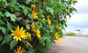 Những điểm ngắm hoa tháng 11