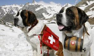 Thụy Sĩ cấm chụp ảnh 'tự sướng' cùng chó