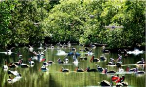 Những địa danh hấp dẫn để ngắm chim