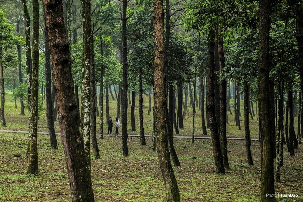 Ghé thăm rừng thông vào những ngày mưa cũng là một trải nghiệm thú vị