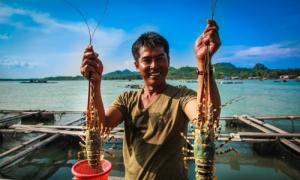 5 hòn đảo lý tưởng ở Việt Nam để thưởng thức tôm hùm
