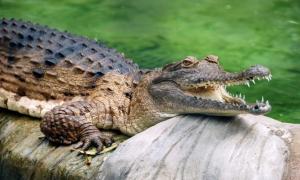 Du khách bị cá sấu tấn công khi tắm thác tại Australia