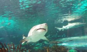 Đi chơi thủy cung, khách 6 tuổi bị cá mập cắn