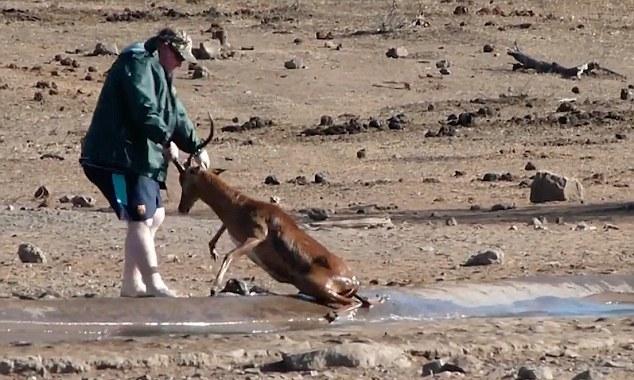 Du khách cứu linh dương khỏi vũng lầy ở Nam Phi