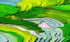 Lịch trình 'săn' lúa chín vàng trên khắp Tây Bắc