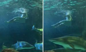Khách khỏa thân nhảy vào bể cá mập trong thủy cung Canada