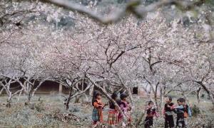 Những cung đường mùa xuân trên cao nguyên đá Hà Giang
