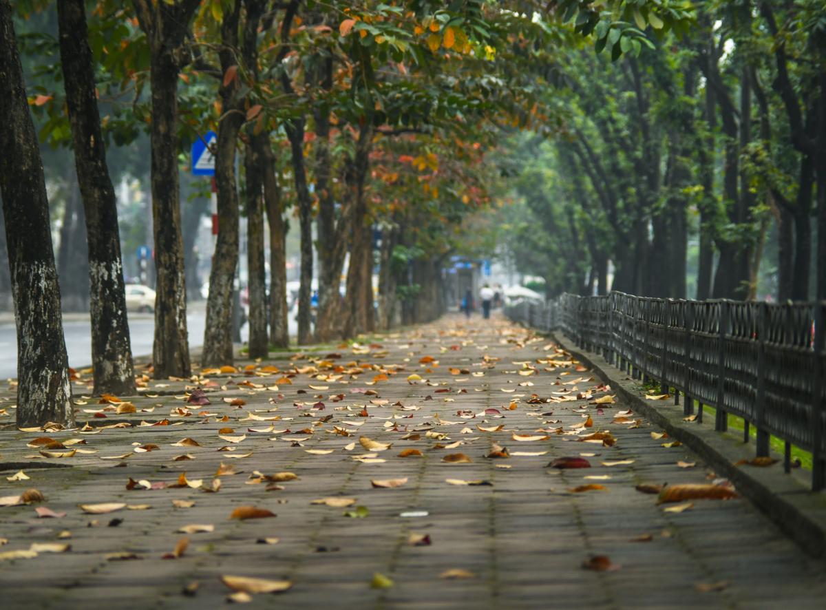 Hà Nội như vào thu khi lá vàng, đỏ khắp phố phường - VnExpress Du lịch