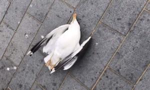 Du khách bị phạt 1.100 USD vì ném chết chim hải âu ở Anh