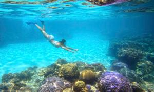 Cô gái Việt lặn ngắm san hô và cá mập ở Philippines