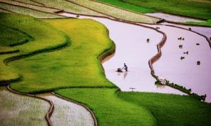Mùa nước đổ trên ruộng bậc thang Tú Lệ và Mù Cang Chải