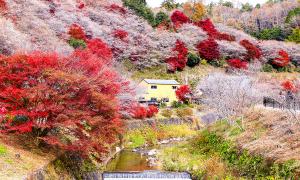 4 điểm dừng cho hành trình khám phá mùa thu Nhật Bản