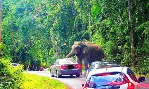 Voi đè móp ôtô chở khách trong vườn quốc gia