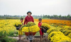 Làng hoa trăm tuổi vào mùa Tết