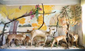 Bảo tàng xác thú ở Đà Lạt