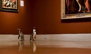 Bảo tàng mời chim cánh cụt đến ngắm tranh