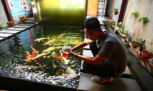 Quán cà phê cá Koi độc đáo ở Hà Nội