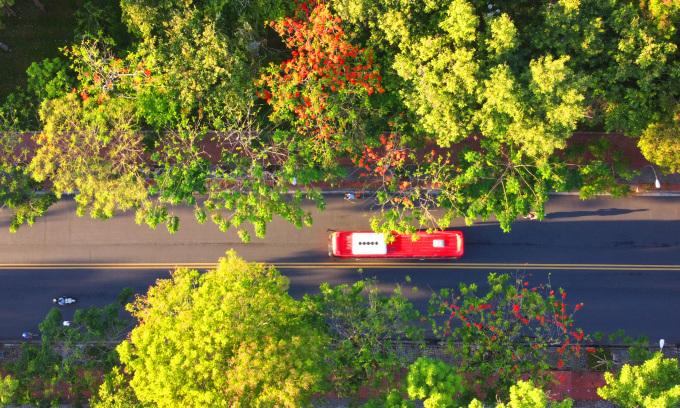 Cung đường rợp bóng cây xanh ở Huế