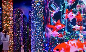 30.000 con cá bơi lội giữa thành phố