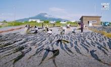 Kombucha - trà trường thọ của người Nhật