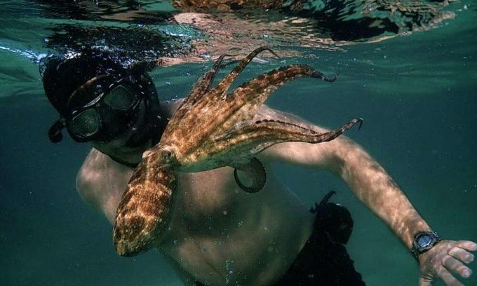 Người giành cả năm để 'hẹn hò' một con bạch tuộc