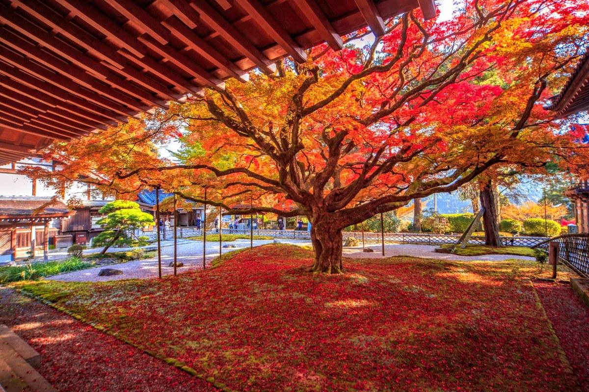 Autumn-Fukuoka-1-1601971049