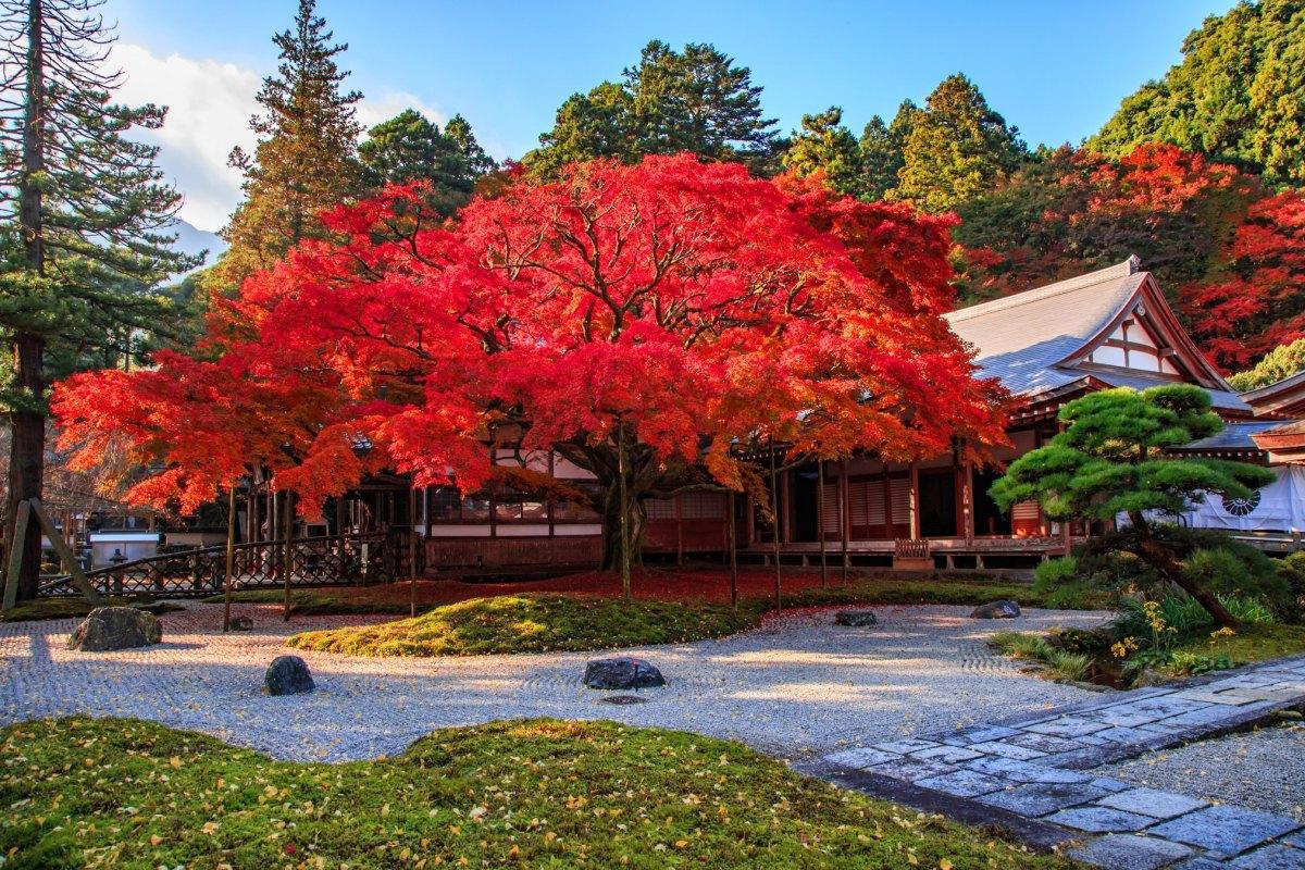 Autumn-Fukuoka-3-1601971048