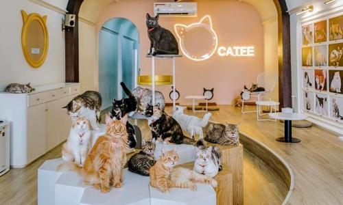 Quán cà phê mèo ở Sài Gòn