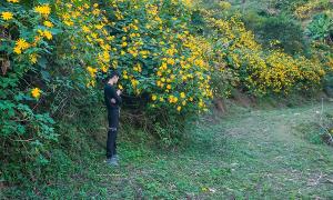 Đi giữa mùa vàng Sài Hồ