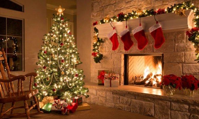 7 điều ít người biết về cây thông Noel