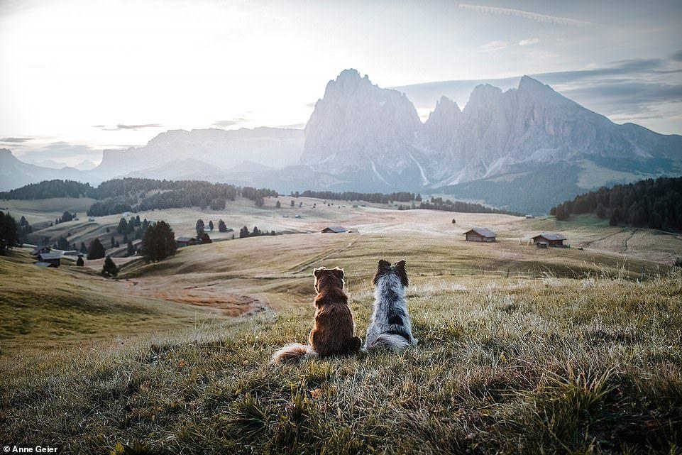 Hai con chó đi du lịch khắp châu Âu