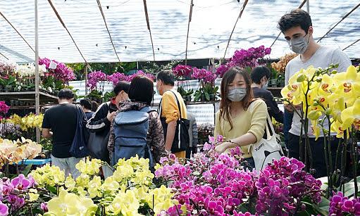 Chợ hoa Tết Hong Kong đông khách bất chấp Covid-19