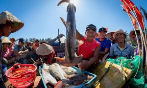Cuộc sống ở làng cá Phú Hải