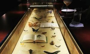 Quán bar Hà Nội như bảo tàng thiên nhiên thu nhỏ
