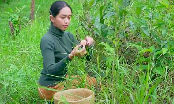 Mùa mưa hái nấm trong rừng thông Đà Lạt