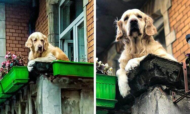 Du khách đổ xô xem chó ngồi trên ban công