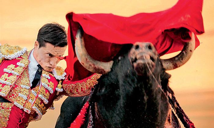 Đấu bò tót - trò man rợ nhưng vinh quang ở Tây Ban Nha