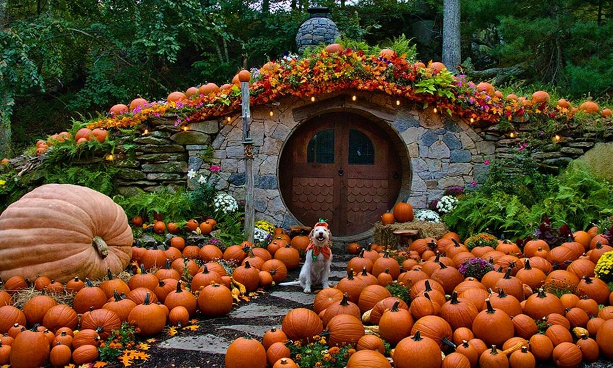 9 điểm đến 'săn' bí ngô dịp Halloween hàng đầu ở Mỹ